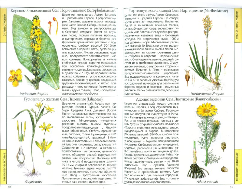 Иллюстрация 1 из 11 для Полевые цветы | Лабиринт - книги. Источник: Лабиринт