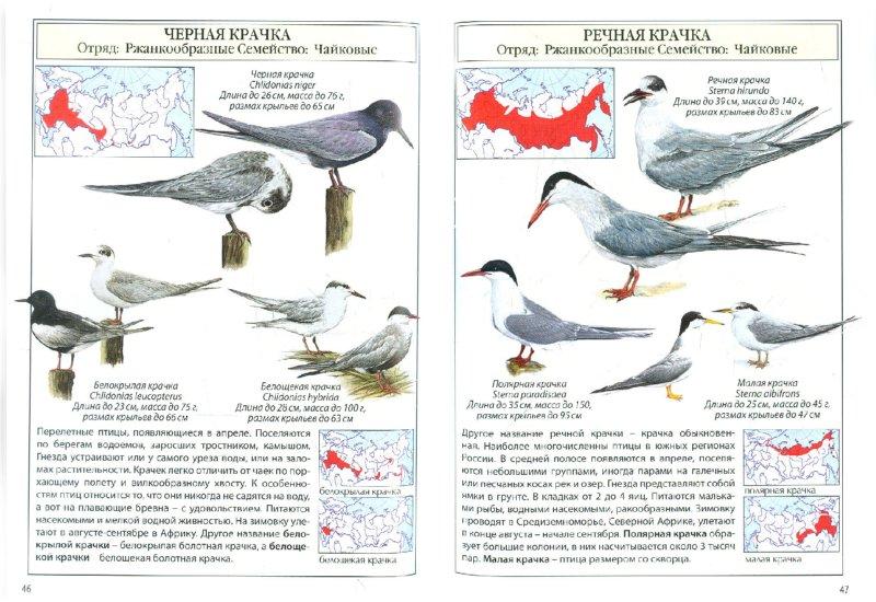Иллюстрация 1 из 17 для Птицы России | Лабиринт - книги. Источник: Лабиринт