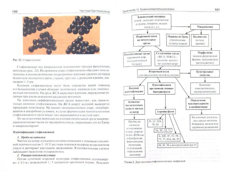 Иллюстрация 1 из 7 для Микробиология, вирусология и иммунология. Рководство к лабораторным занятиям - Сбойчаков, Карапац | Лабиринт - книги. Источник: Лабиринт