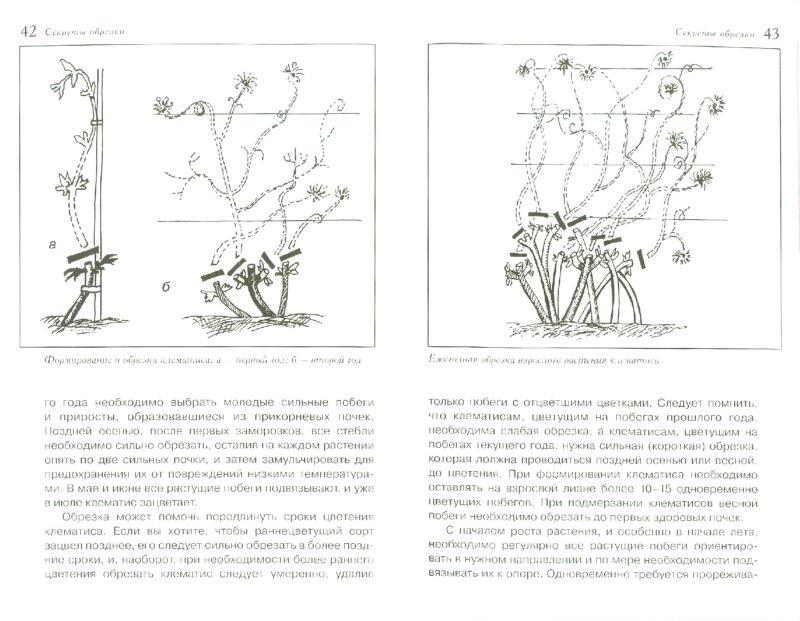 Иллюстрация 1 из 5 для Секреты обрезки - Валентин Воронцов | Лабиринт - книги. Источник: Лабиринт