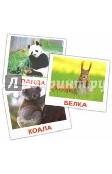 """Комплект карточек мини """"Дикие животные"""" 8х10 см"""
