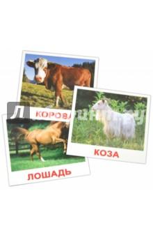 Купить Комплект карточек Домашние животные (16, 5х19, 5 см), Вундеркинд с пелёнок, Обучающие игры