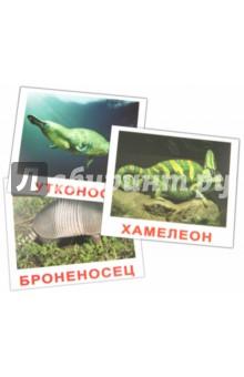 """Комплект карточек """"Экзотические животные"""" (16,5х19,5 см)"""