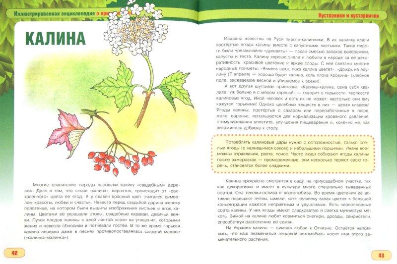 Иллюстрация 1 из 5 для Растения лесов, полей, лугов и болот - Сергей Шустов   Лабиринт - книги. Источник: Лабиринт