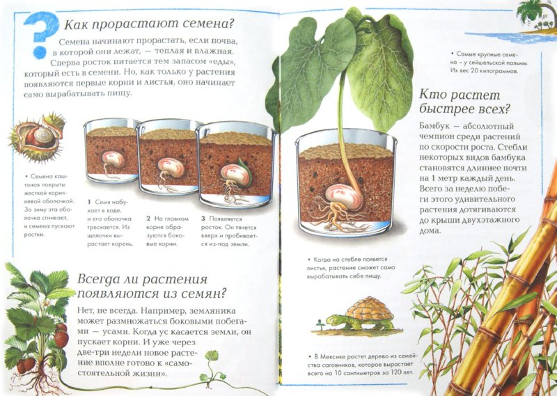 Иллюстрация 1 из 12 для Мир растений | Лабиринт - книги. Источник: Лабиринт