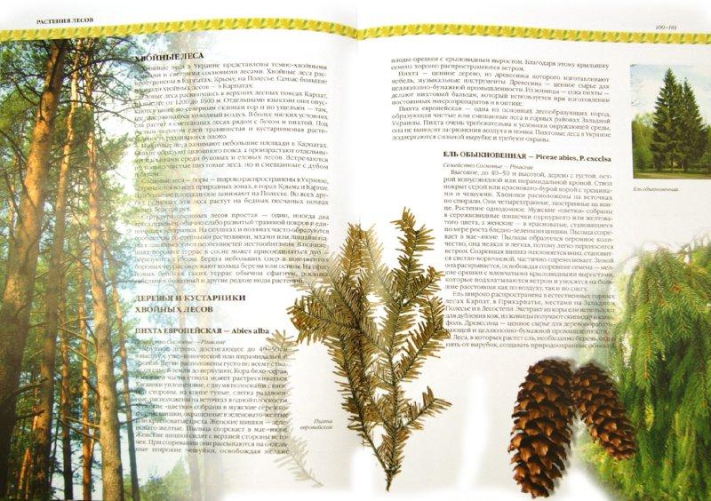 Иллюстрация 1 из 16 для Растения Украины - Юрий Гамуля   Лабиринт - книги. Источник: Лабиринт
