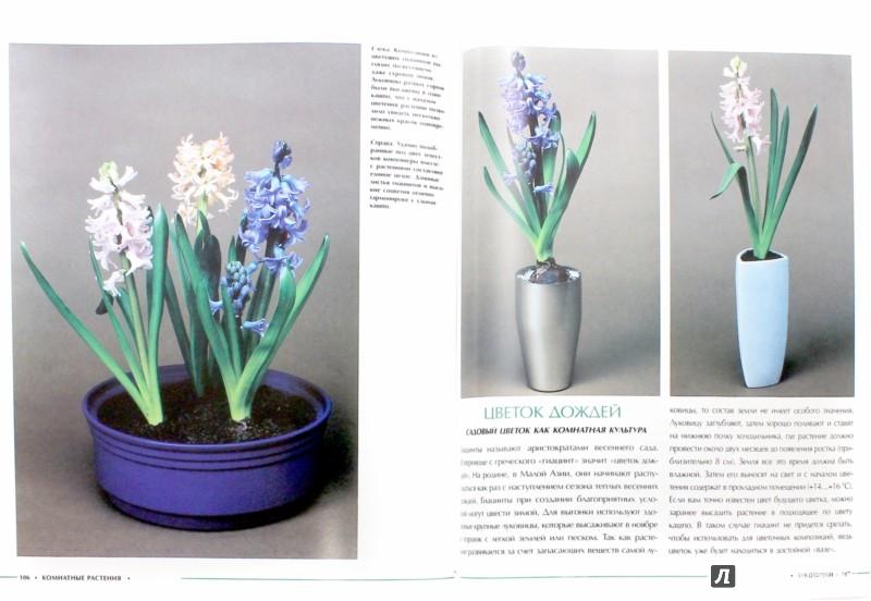 Иллюстрация 1 из 16 для Комнатные растения - Анастасия Анисимова | Лабиринт - книги. Источник: Лабиринт