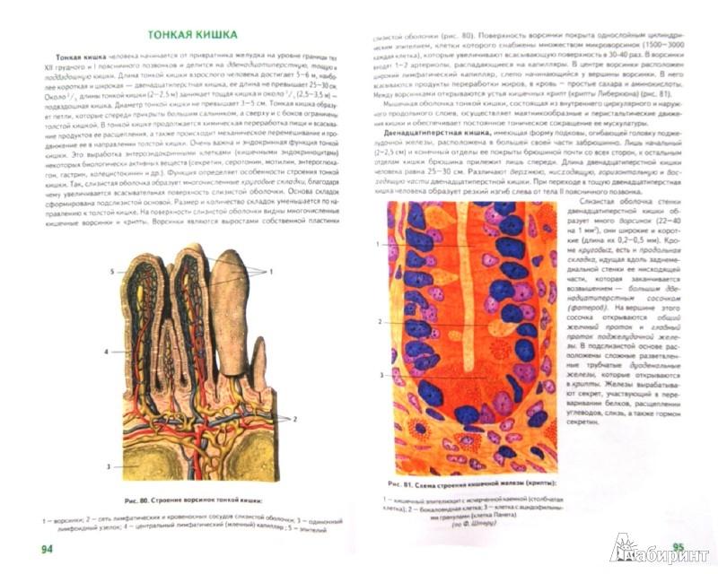 Иллюстрация 1 из 15 для Анатомия человека - Билич, Крыжановский   Лабиринт - книги. Источник: Лабиринт