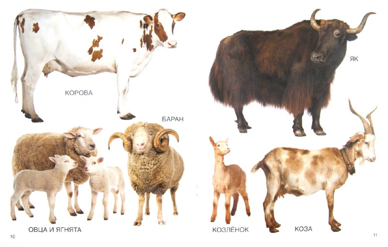 Иллюстрация 1 из 16 для Мои блестящие книжки. Животные   Лабиринт - книги. Источник: Лабиринт