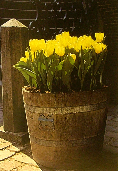 Иллюстрация 1 из 13 для Луковичные растения. Иллюстрированная энциклопедия - Дейк Ван | Лабиринт - книги. Источник: Лабиринт