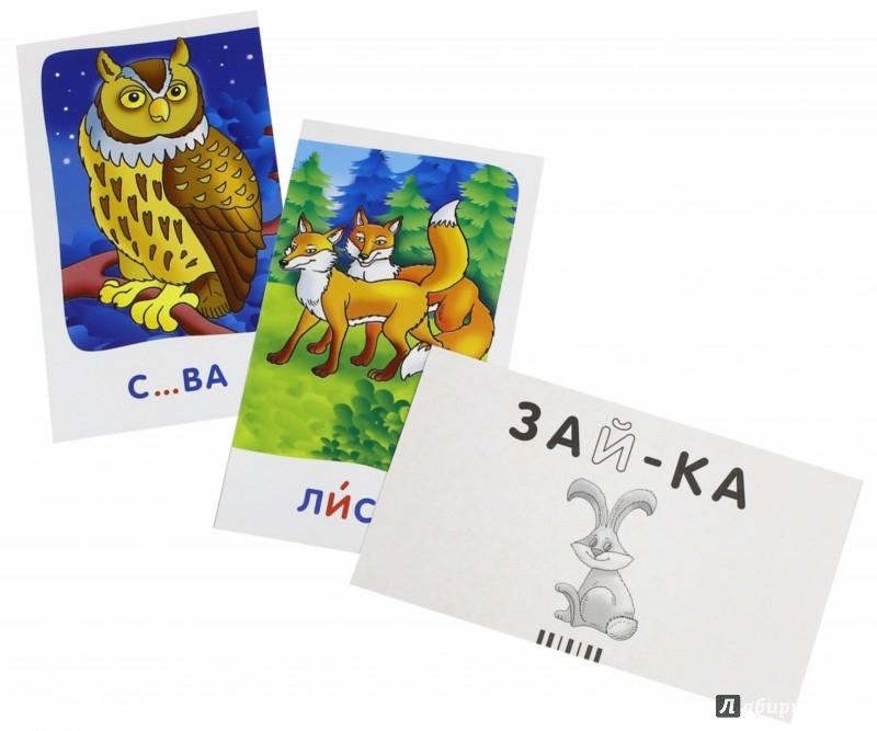 Иллюстрация 1 из 17 для Сова. Гласные и согласные в корне слова. Набор карточек с картинками - А. Штец | Лабиринт - книги. Источник: Лабиринт