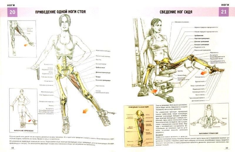 Иллюстрация 1 из 6 для Анатомия силовых упражнений для женщин - Фредерик Делавье | Лабиринт - книги. Источник: Лабиринт