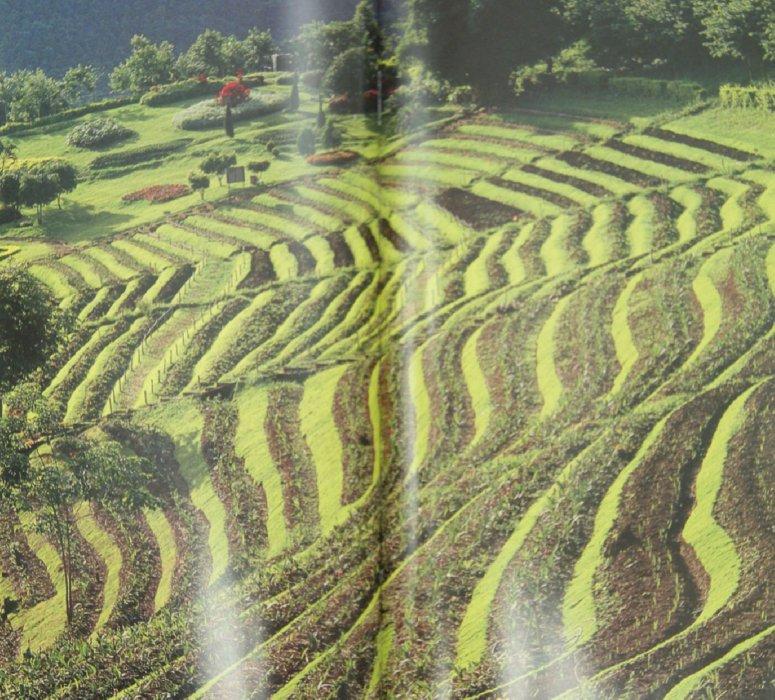 Иллюстрация 1 из 14 для Таиланд | Лабиринт - книги. Источник: Лабиринт
