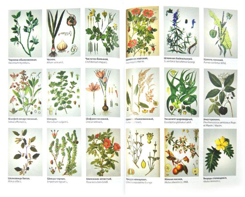 Иллюстрация 1 из 22 для Лекарственные растения. Использование в народной медицине и быту - Пастушенков, Пастушенков, Пастушенков | Лабиринт - книги. Источник: Лабиринт
