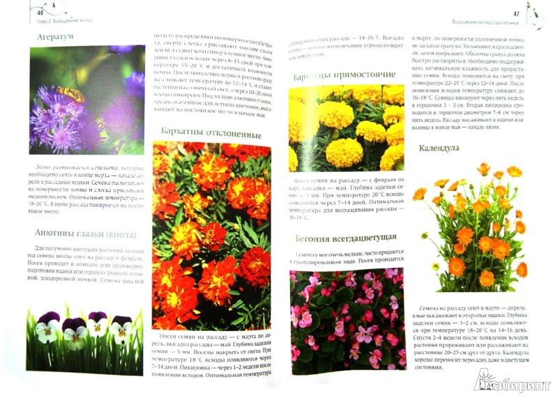 Иллюстрация 1 из 16 для Цветы на балконе и лоджии + Комнатные растения дарят здоровье + семена | Лабиринт - книги. Источник: Лабиринт