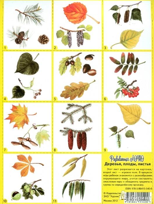 деревья москвы фото с названиями