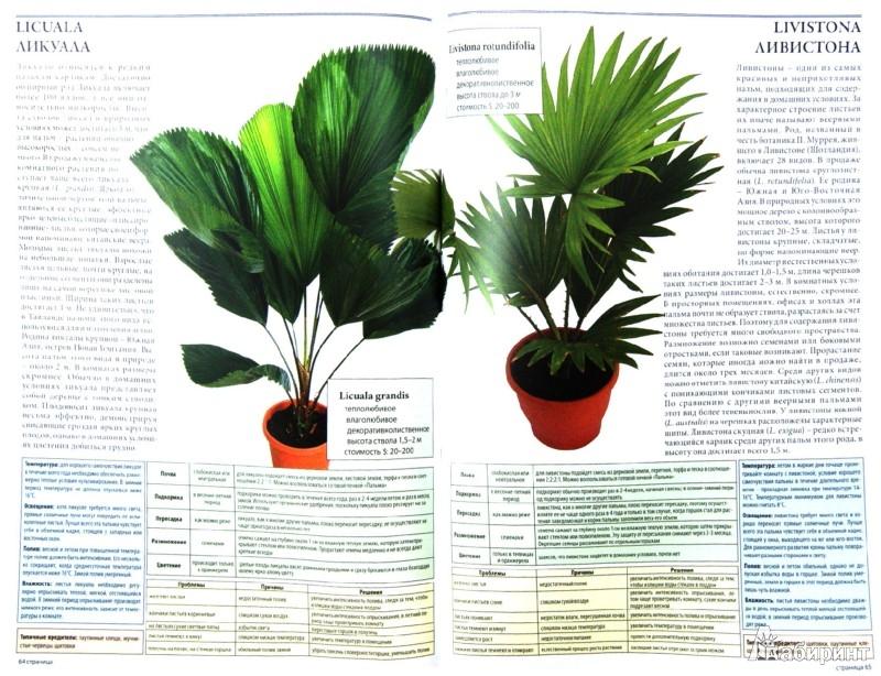 Иллюстрация 1 из 12 для Все о лучших комнатных растениях - Ван дер Неер Ян | Лабиринт - книги. Источник: Лабиринт