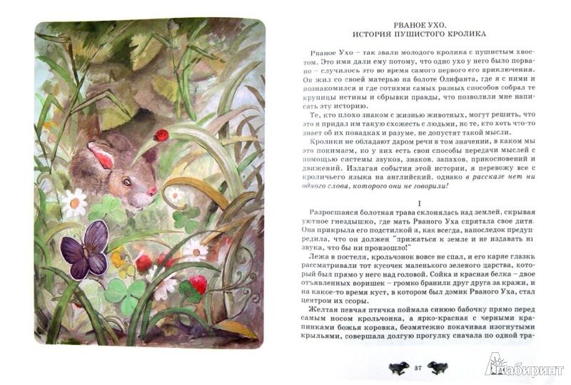 Иллюстрация 1 из 14 для Мустанг-иноходец - Эрнест Сетон-Томпсон | Лабиринт - книги. Источник: Лабиринт