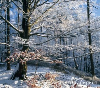 Иллюстрация 1 из 12 для Календарь 2013. Forest/Лес   Лабиринт - сувениры. Источник: Лабиринт