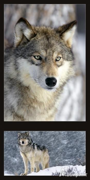 Иллюстрация 1 из 5 для Календарь 2013. Wild Animals/Дикие животные | Лабиринт - сувениры. Источник: Лабиринт