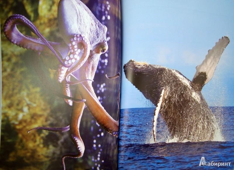 Иллюстрация 1 из 13 для Подводный мир - Эмма Сэл | Лабиринт - книги. Источник: Лабиринт