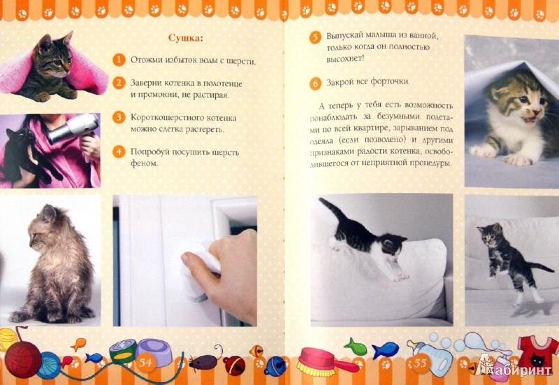 Иллюстрация 1 из 9 для Учусь ухаживать за котенком - Ксения Митителло | Лабиринт - книги. Источник: Лабиринт
