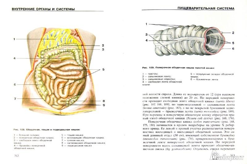 Иллюстрация 1 из 15 для Атлас анатомии человека | Лабиринт - книги. Источник: Лабиринт