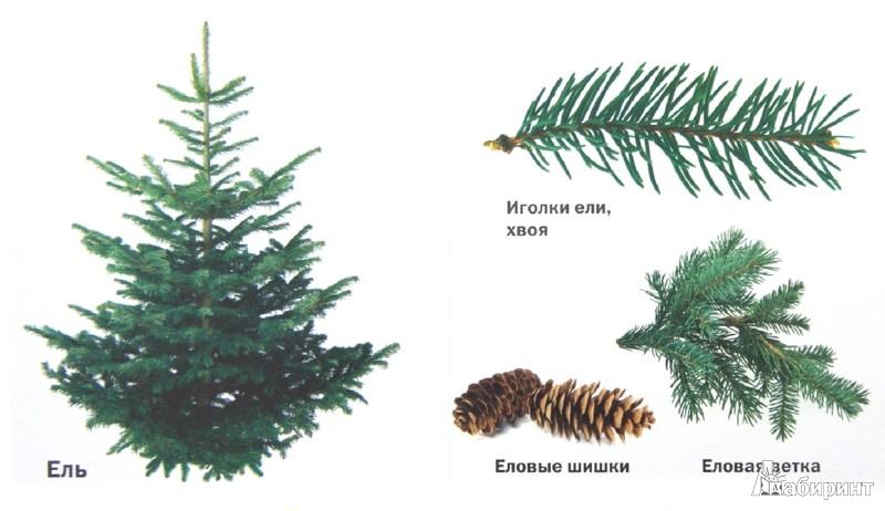 Иллюстрация 1 из 17 для Такие разные деревья - Aurelio Alfonso | Лабиринт - книги. Источник: Лабиринт