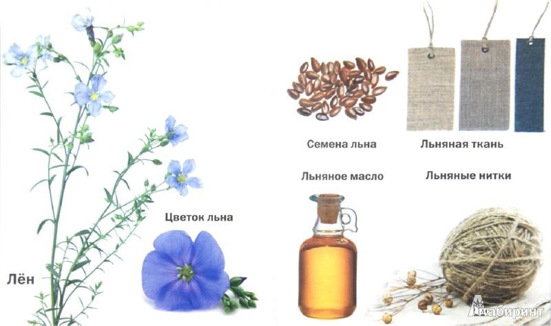 Иллюстрация 1 из 9 для Такие разные цветы | Лабиринт - книги. Источник: Лабиринт