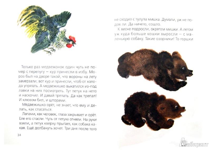 Иллюстрация 1 из 16 для Тюпа и Томка (+CD) - Евгений Чарушин | Лабиринт - книги. Источник: Лабиринт