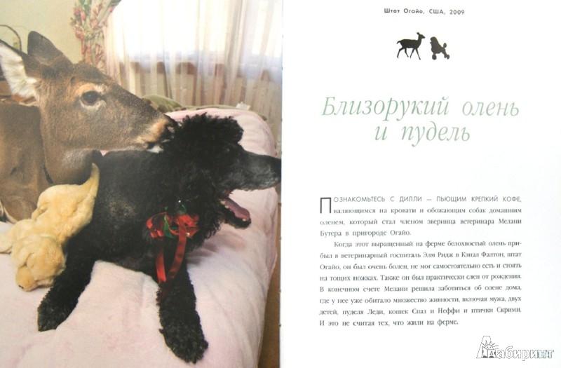 Иллюстрация 1 из 14 для Невероятная правда о дружбе: 47 историй в фотографиях об удивительной дружбе животных - Дженнифер Холанд   Лабиринт - книги. Источник: Лабиринт