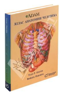 A.D.A.M. Атлас анатомии человека анна спектор большой иллюстрированный атлас анатомии человека