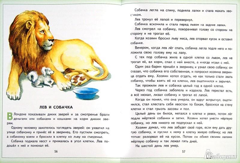Иллюстрация 1 из 4 для Три медведя. Лучшие сказки и рассказы - Лев Толстой   Лабиринт - книги. Источник: Лабиринт