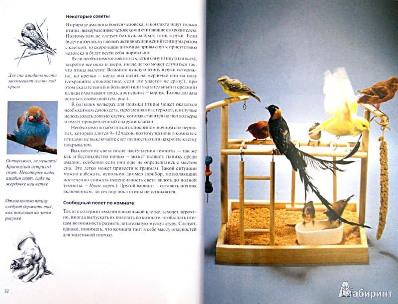 Иллюстрация 1 из 3 для Амадины. Содержание и уход - Биргит Голлманн   Лабиринт - книги. Источник: Лабиринт