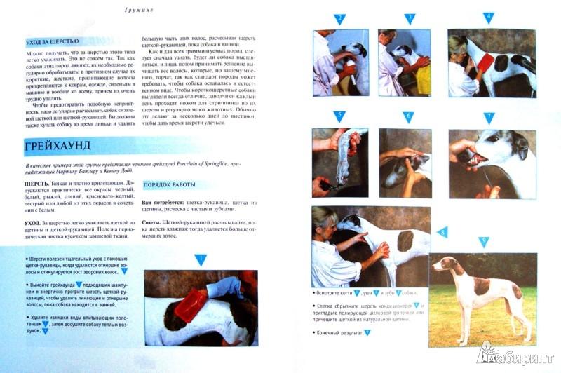 Иллюстрация 1 из 5 для Груминг. Полное руководство по уходу за 170 породами собак - Айлин Гисон | Лабиринт - книги. Источник: Лабиринт