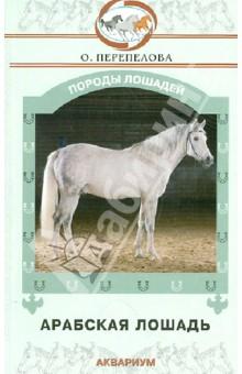 Арабская лошадь от Лабиринт