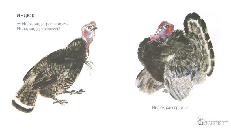 Иллюстрация 1 из 8 для Вот они какие - Евгений Чарушин | Лабиринт - книги. Источник: Лабиринт