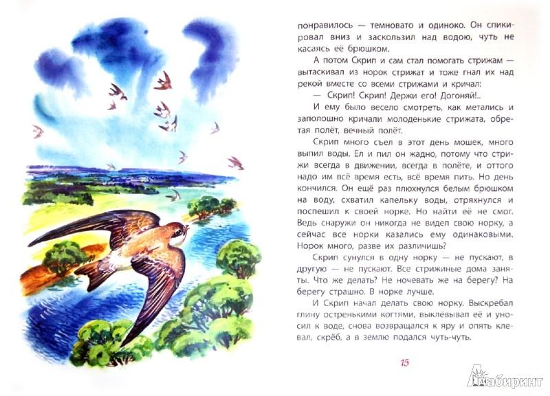 Иллюстрация 1 из 21 для Стрижонок Скрип. Рассказы - Виктор Астафьев | Лабиринт - книги. Источник: Лабиринт