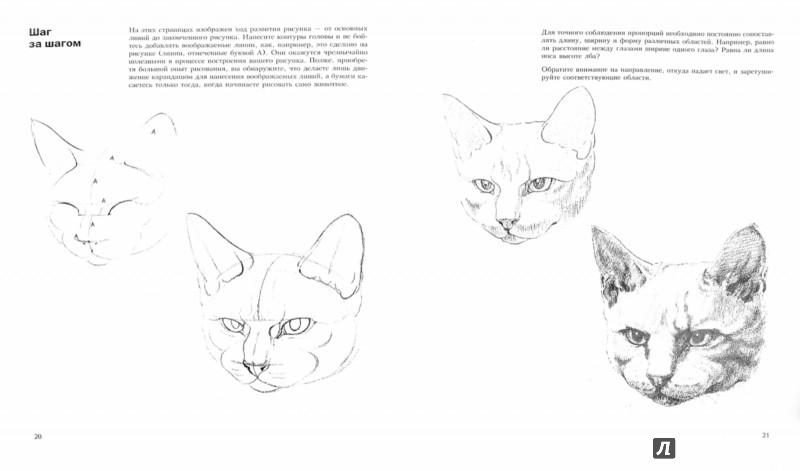 Иллюстрация 1 из 39 для Учитесь рисовать кошек - Дэвид Браун | Лабиринт - книги. Источник: Лабиринт