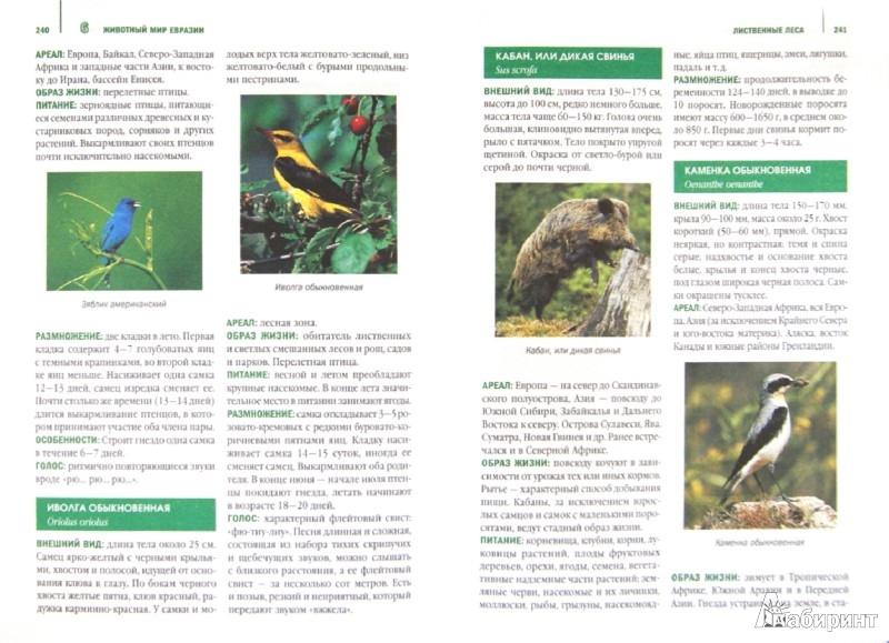 Иллюстрация 1 из 30 для Животные шести континентов. Иллюстрированная энциклопедия | Лабиринт - книги. Источник: Лабиринт