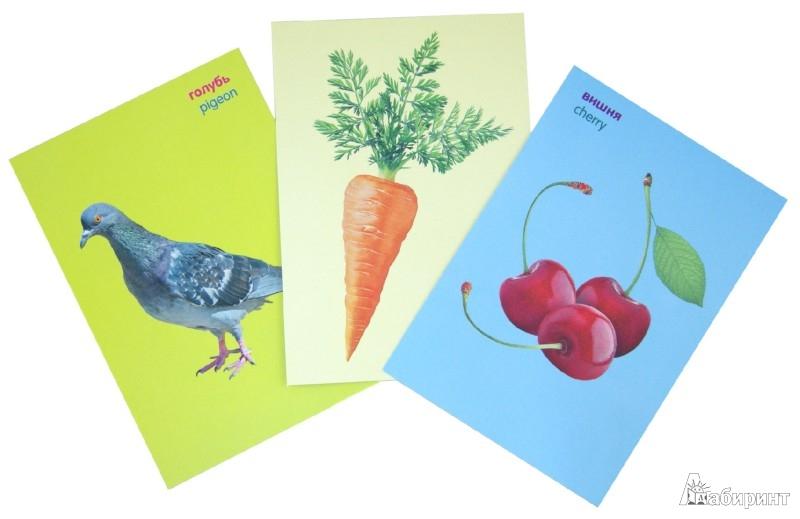 Иллюстрация 1 из 4 для Первая энциклопедия. Овощи. Фрукты. Животные. Растения | Лабиринт - книги. Источник: Лабиринт