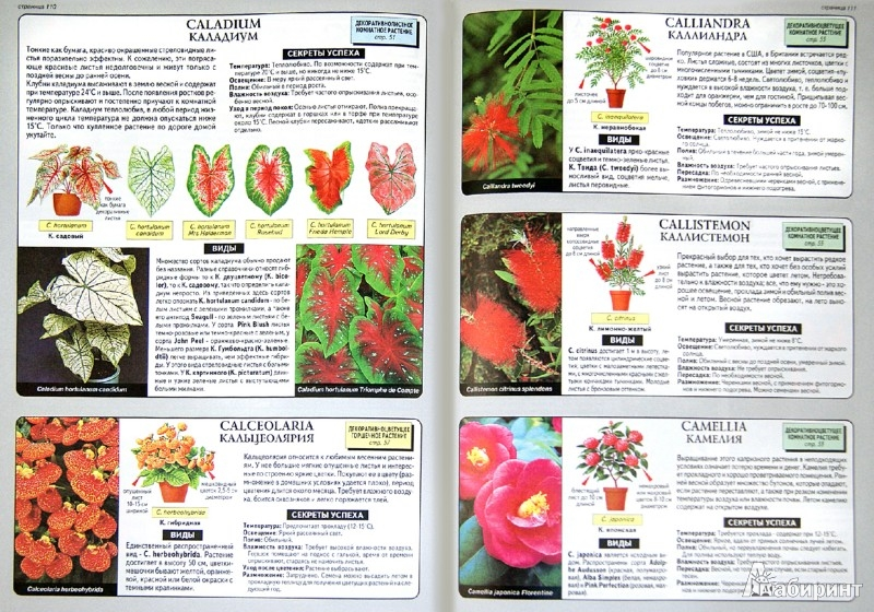 Иллюстрация 1 из 11 для Все о комнатных растениях - Дэвид Хессайон | Лабиринт - книги. Источник: Лабиринт