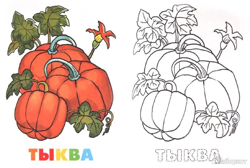 Иллюстрация 1 из 5 для Раскраска. Овощи | Лабиринт - книги. Источник: Лабиринт