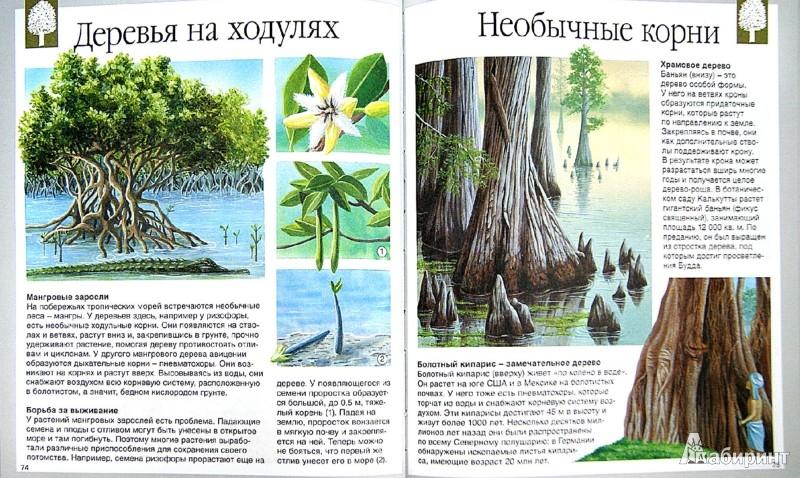 Иллюстрация 1 из 37 для Тайны природы - Кристин Лазье | Лабиринт - книги. Источник: Лабиринт