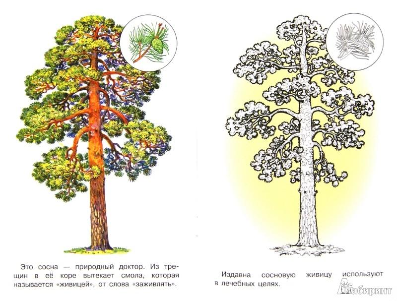 Иллюстрация 1 из 14 для Раскраска. Деревья   Лабиринт - книги. Источник: Лабиринт