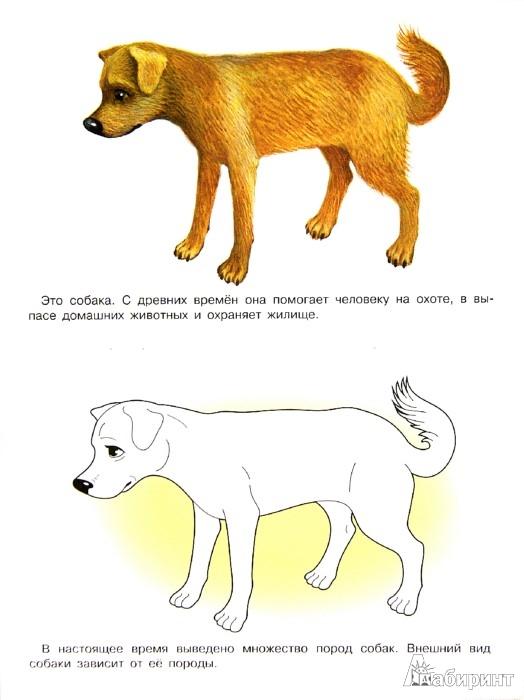 Иллюстрация 1 из 22 для Раскраска. Домашние животные | Лабиринт - книги. Источник: Лабиринт