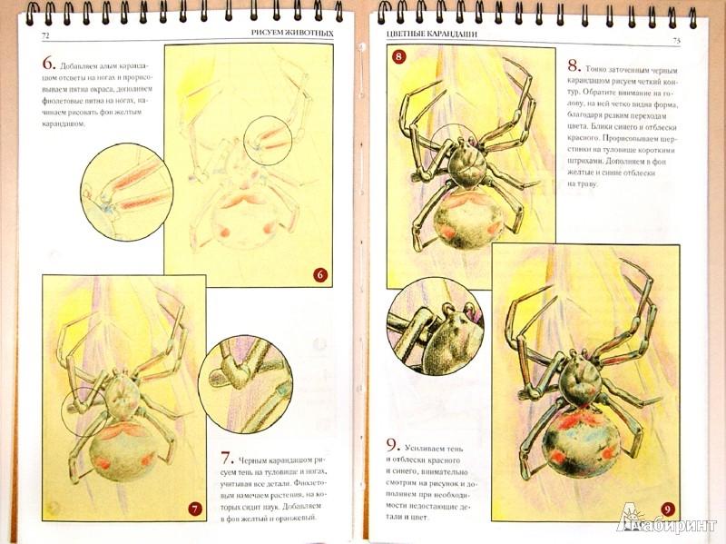 Иллюстрация 1 из 9 для Рисуем животных - Алла Марковская | Лабиринт - книги. Источник: Лабиринт