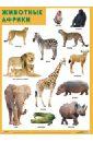Плакат Животные Африки животные африки