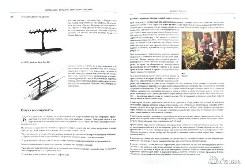 Иллюстрация 1 из 31 для Вино. Книга о виноградной лозе и вине - Савич Светозар | Лабиринт - книги. Источник: Лабиринт