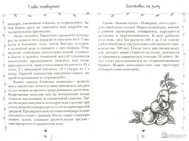 Иллюстрация 1 из 12 для Помидоры. Всегда с отличным урожаем - Клавдия Семенова | Лабиринт - книги. Источник: Лабиринт